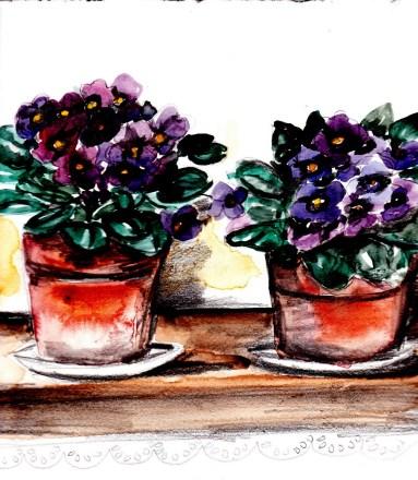 Per le violette fiorite.